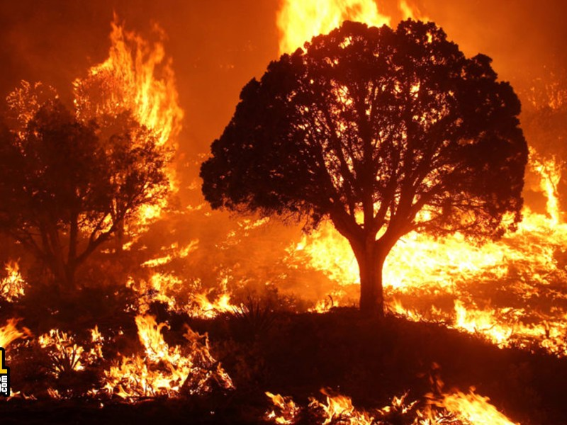 Climate Crisis: Historic Arizona Wildfires May Worsen COVID-19