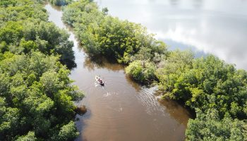 A peaceful kayak trip through mangroves in Florida