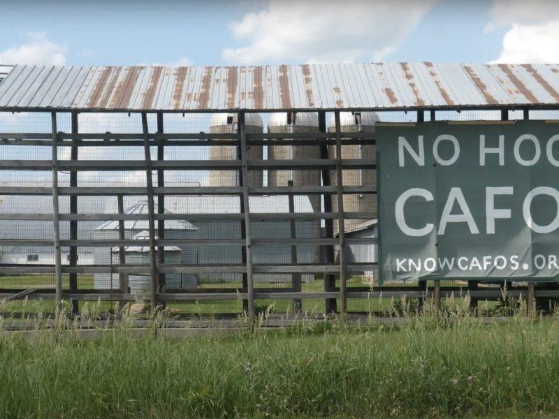 """Screenshot: A sign reads """"No Hog CAFO"""""""