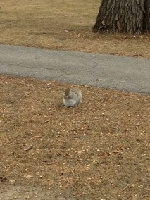 Fattest squirrel alive