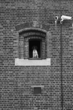 There's always someone watching... John Callaway [2016]