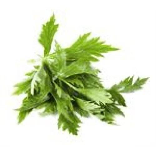 Celery Leaves - Onlinerecipe.website