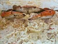 Hot Crab Dip - TheRecipe.Website
