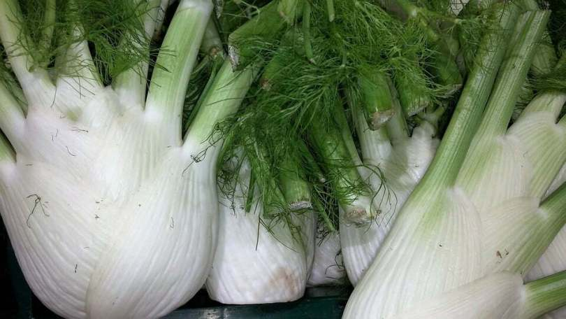 Fennel Leaves - TheRecipe.Website