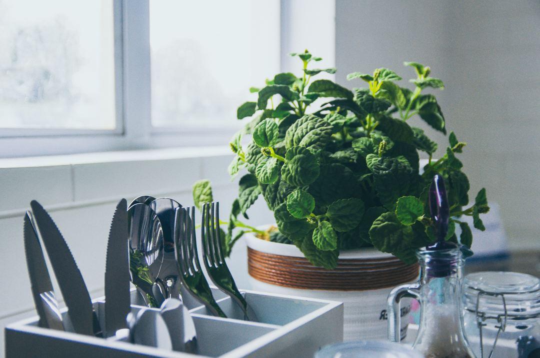 Pfanze in Küche