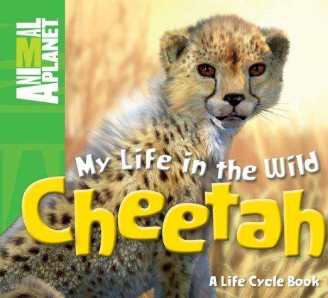 Nonfiction Picture Book Wednesday  Cheetahs  fast as the wind     Nonfiction Picture Book Wednesday There is a Book for that