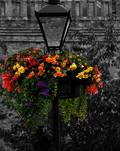 lamp-post-with-flowers