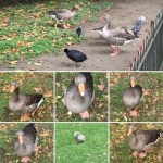 Quacking my way through lunch