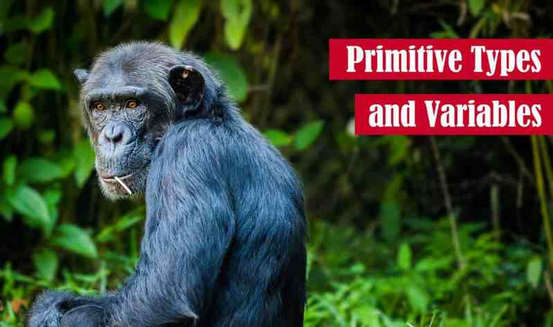 Primitive Types and Variables