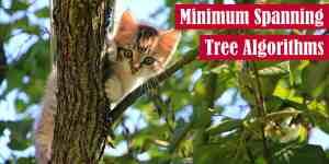 Minimum Spanning Tree Algorithms Featured Image