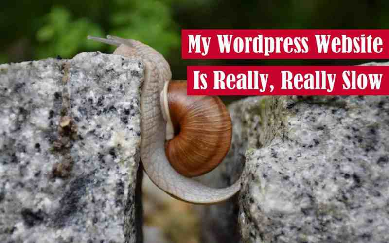 My WordPress Website is Really, Really Slow