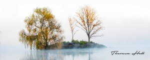 Small island containing three wintry trees in morning mist.