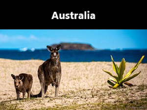 shop icon—324x243—kangaroos—Pebbly Beach, New South Wales, Australia