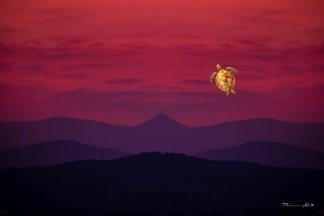 Turtle flying in a red sunset sky over mountains.
