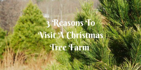 3-reasons-to-visit-a-christmas-tree-farm