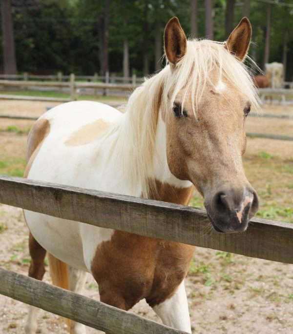 Chincoteague Pony Centre in Chincoteague, Virginia