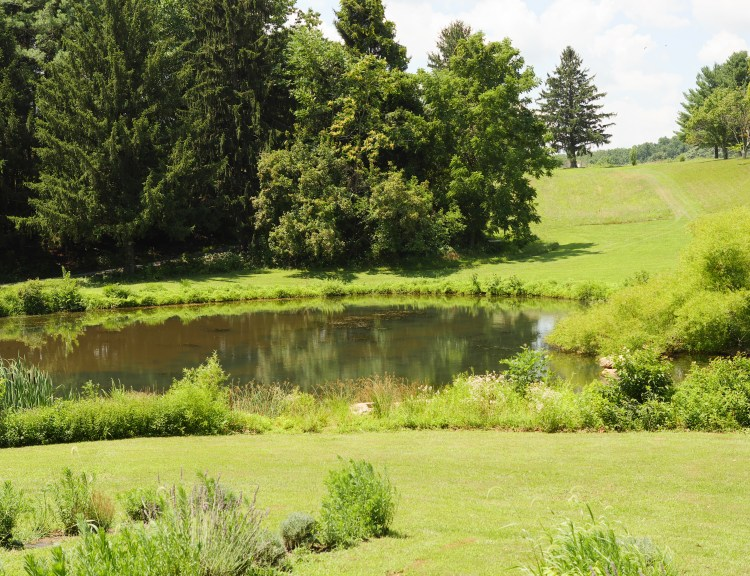 The lake at Soleado Lavender Farm in Montgomery County, Maryland - Theresa's Reviews