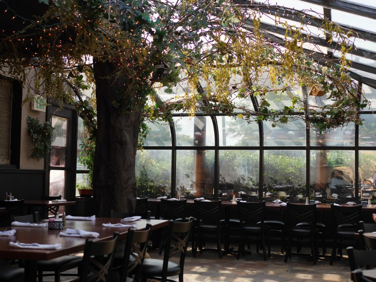 Stella Notte has a beautiful ambiance with plenty of natural light as well as lights hanging in a tree.