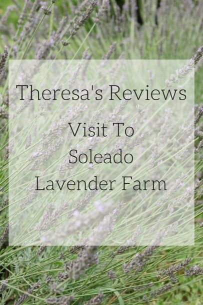 Check out some reasons to visit Soleado Lavender Farm in Montgomery County, Maryland! - Theresa's Reviews