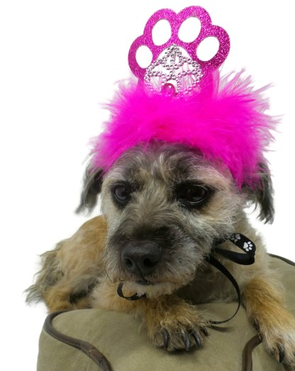 Dog Birthday Crown, Misfit Manor, Nancy Halverson, Dog Party Favors