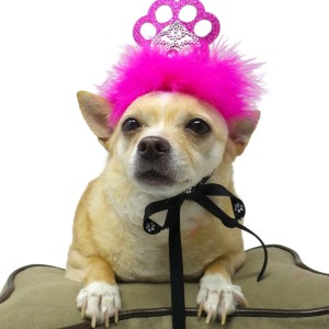 Dog Birthday Crown