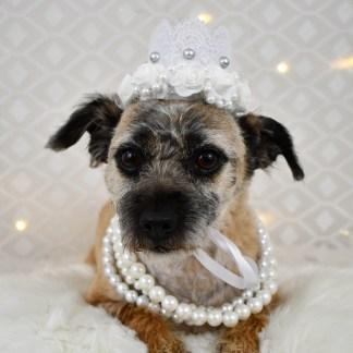 Floral Dog Crown, Misfit Manor Shop