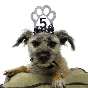 Silver Dog Birthday Crown, Misfit Manor Shop, Dog Party Favors