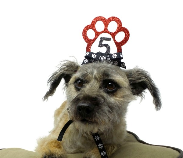 Red Dog Birthday Crown, Misfit Manor Shop, Nancy Halverson, Dog Party Favors