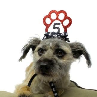 Red Dog Birthday Crown, Misfit Manor Shop, Nancy Halverson, Dog Party Favors
