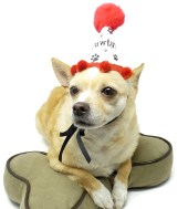 Dog Birthday Hat, Dog Party Favors, Paw Print Party Favors, Puppy Birthday Party