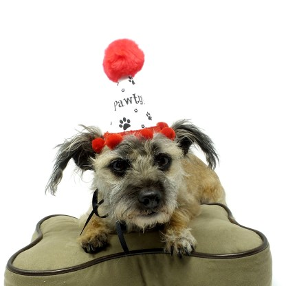 Dog Birthday Hat, Paw Print Party Favors, Dog Birthday Party, Misfit Manor Shop