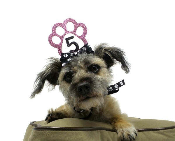 Pink Dog Birthday Crown, Misfit Manor Shop, The Rescue Mama, Dog Party Favors, Nancy Halverson