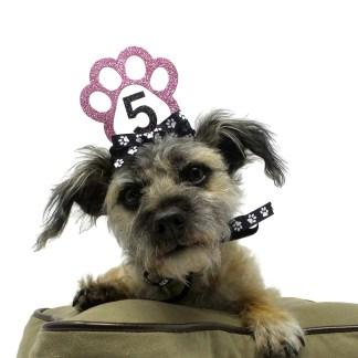 Pink Dog Birthday Crown, Misfit Manor Shop, The Rescue Mama, Dog Party Favors, Nancy Halverson