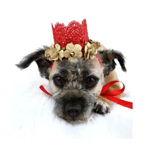 Dog Wedding Crown, The Misfit Manor Shop