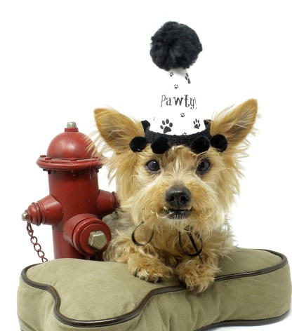 Dog Birthday Hats, Dog Party Hats, Misfit Manor Shop, Gotcha Day, Dog Adoption Party