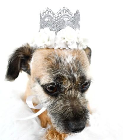 Dog Wedding Crown, Dog Wedding Outfit, Dog Wedding Attire, Misfit Manor Shop