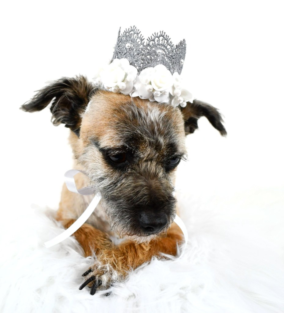 Dog Wedding Crown, Dog Wedding Outfit, Dog Wedding Attire, Misfit Manor Shop