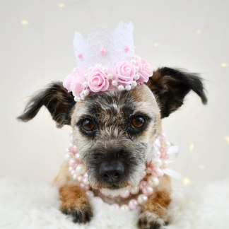 Dog of Honor Crown - Pretty in Pink - Misfit Manor Shop