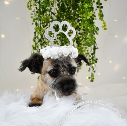Dog Wedding Attire, Dog Crown, Misfit Manor Shop