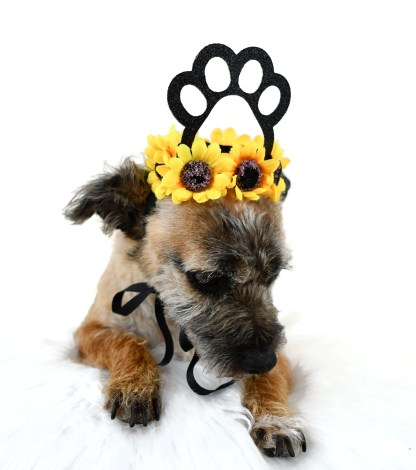 Dog Crown, Dog Birthday Hat, Barkday Hat, Dog Party Crown, Misfit Manor Shop