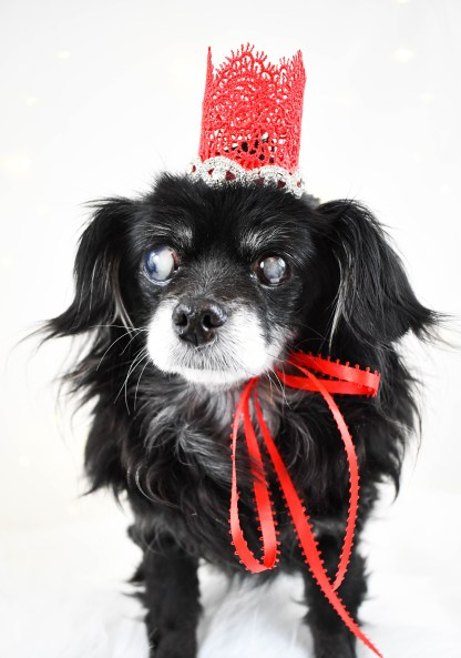 The Divine Canine Dog Crown, The Misfit Manor Shop