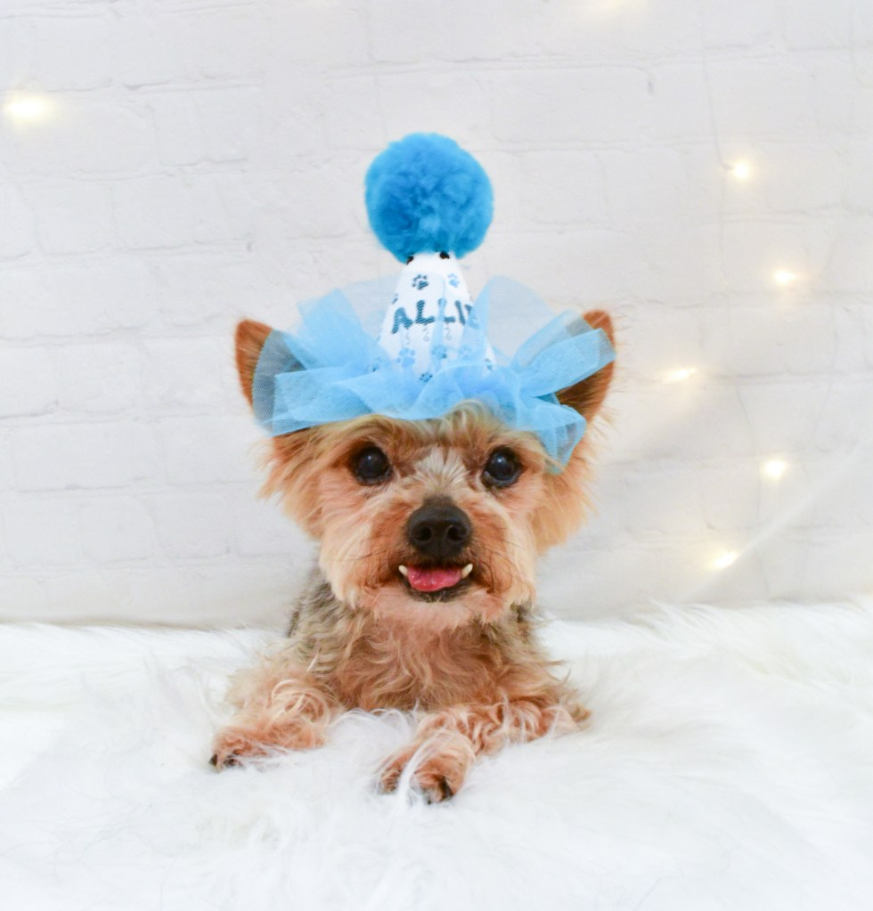 Blue Dog Birthday Hat