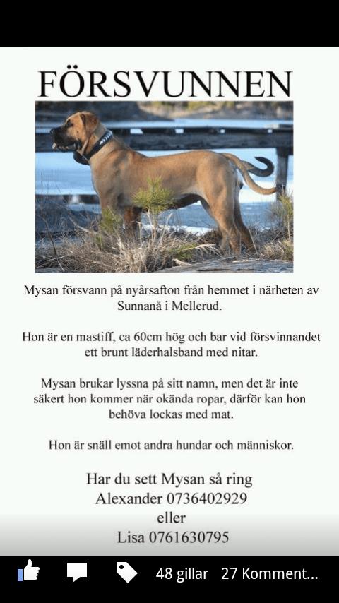 Hjälp till att hitta Mysan!