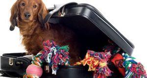 Dog travel companions