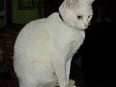 Cat ABBA