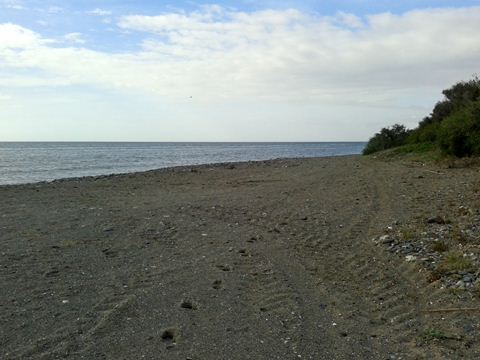 Morocha dog beach