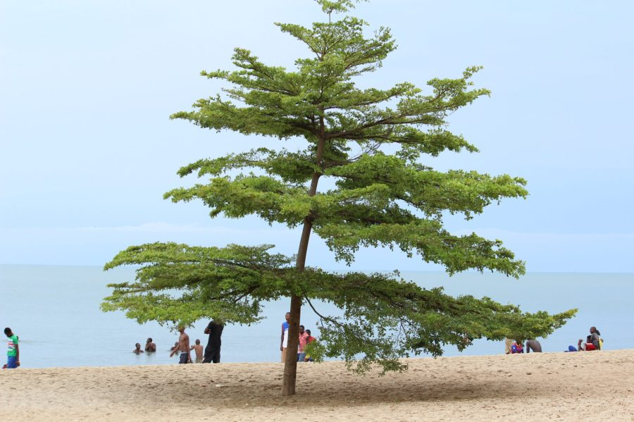 Lake Tanganyika Tree