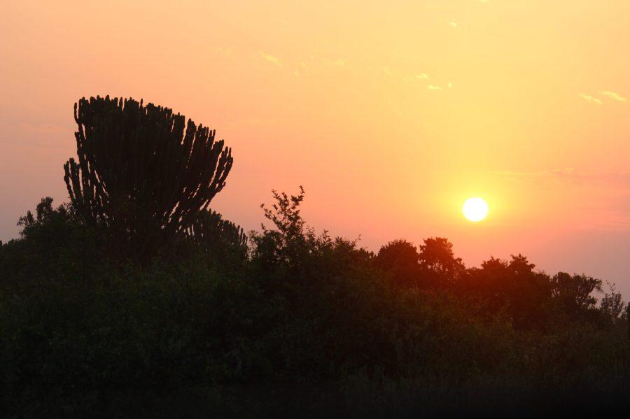 Sunrise at Queen Elizabeth Park
