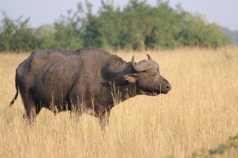 Morning Animal Safari