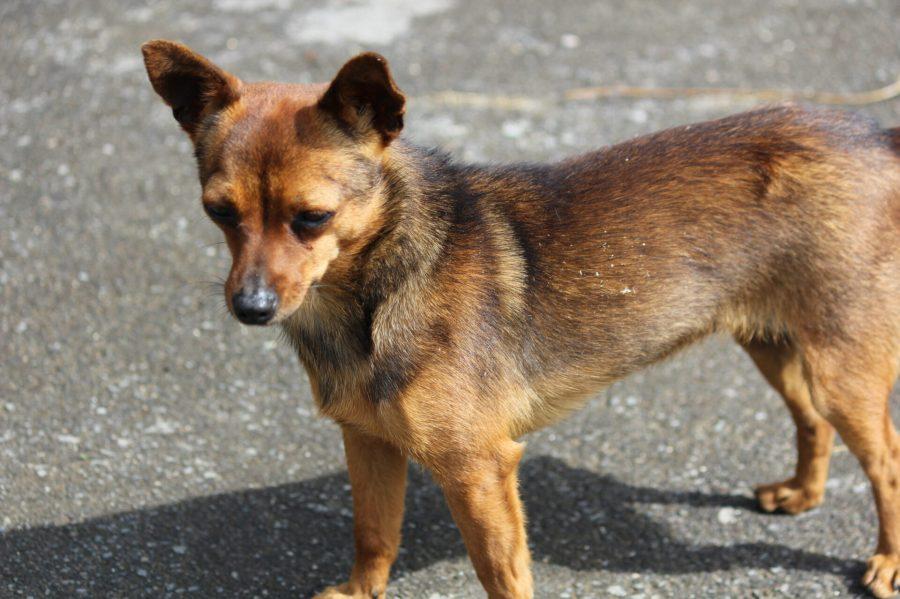 Zumaia - Jesuskoa Farm Dog